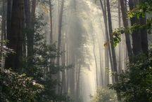 Wilderness: Mountains