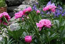 Widzę piękny ogród, pełen kwiatów i