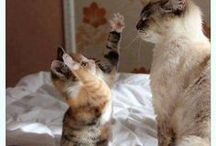 anim. ; cats