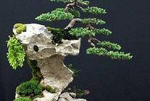 Bonsai miniaturowe odzwierciedlenie tego, co prezentuje nam natura.
