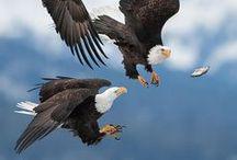 anim. ; birds