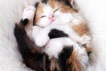 Hayat kedilerle güzel