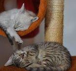 Naše koťátka / Our kittens