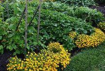 garden / yard / by Amy Smith