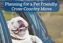 Moving with Pets / Relocating and travelling can be a stressful process for your pets. Here you'll find helpful tips to keep your pets happy and stress-free during the move.