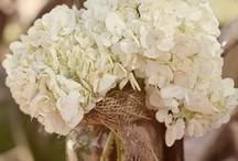 My Rustic Wedding / by Dani Lopez