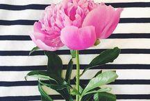 FLOWERS•