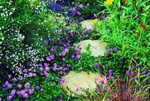 Green: Garden / My garden and landscape inspirations.