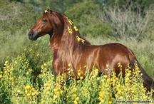 Horses / by Lara Elizabeth