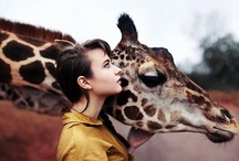 Giraffes Are Love / by Lara Elizabeth