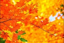 Fall ideas / by Bella Rose