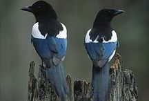 Two For Joy / Magpies In Art & Nature / by Lara Elizabeth