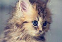 Sweet :D