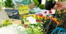 Instagram エクステリア・ガーデン・外構・庭 / Instagram ザ・シーズン公式サイトcover