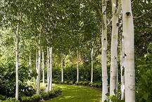 Garden:  Landscape - Yard / Flowering plants, landscape ideas, garden design, tips / by Joy Watts