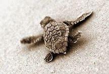 Animal medicine / Pictures of cute animals