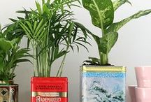 Plant collection / Indoor plants, Urban jungle, Plant collection, plant collector
