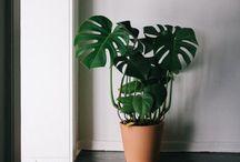 Flora / by Laura Norris-Jones