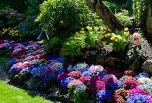 How does your garden grow / by Kerri Merriam