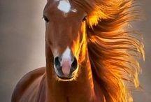 Horses / by Jayson