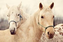 Horses / Horses / by Jessica Byrum
