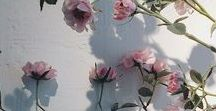 even the sweetest flower dies / char: lillian rosewood  src: devilspawn (oc)