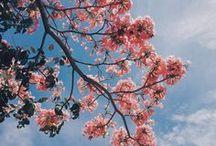 Flowers 花