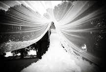Wedding Photography  / by Nikki Hershey