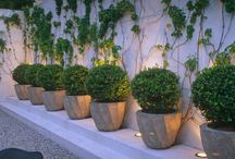 P L A N T S / Container Gardening and Green Space