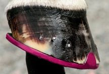 Forever An Equestrian - Equine Care / Caring for your equine companion. / by Kathleen