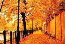 Autumn Love / Everything I love about autumn (Samhain). / by Kathleen