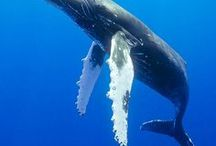 Magnificent Whales / The beauty of whales