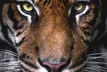 Tigri e leoni