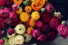 COLOR / by anne fleming
