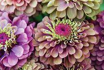 Gardens / by anne fleming
