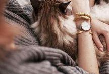 siberian cats / Sibirische Katzen und Neva masquerade - meine kleinen Fellmonster und andere schöne Vertreter der Rasse