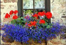 Plants from heaven / Plants, DIY, garden, flowers, pots