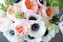 Flowers / We love beautiful #blooms! / by Exuviance.com