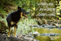 Pure Canine quotation photos / Images by Kate Ormond Photography for Okanagan Dog, paired with some wise words