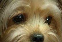 puppy love / by DoorHardwareLux