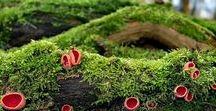 Mushroom Growing / Plans for My Future Shroomery.