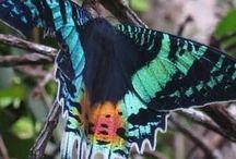 ガ / 鱗翅目のうち、アゲハチョウ上科、セセリチョウ上科、シャクガモドキ上科を除く18上科