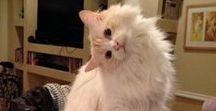 Funny Cat Photos / Funny Cat Photos Of Any Kind~!