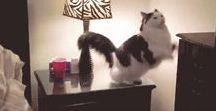 Cat Gifs And Videos / Hilarious Cat Gifs