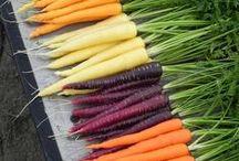 Gardening / helpful tips / by Heather Rivas
