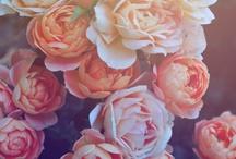 • floral •