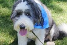 SPCA Doggie Dash 2013 - Land Park Sacramento / by Dave Malby
