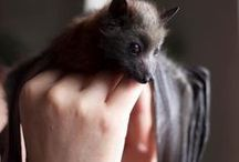 Inspiration - Bats!