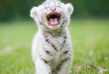 Bigcats