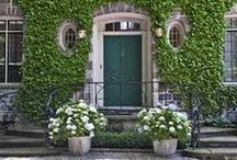 Ivy is never boring / Ivy; English Ivy; Outdoor gardening; Gardening Trends